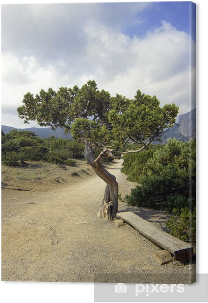 Obraz na płótnie Samotna sosna - Pory roku