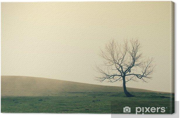 Obraz na płótnie Samotne drzewo z rocznika efekt filtra - Tematy