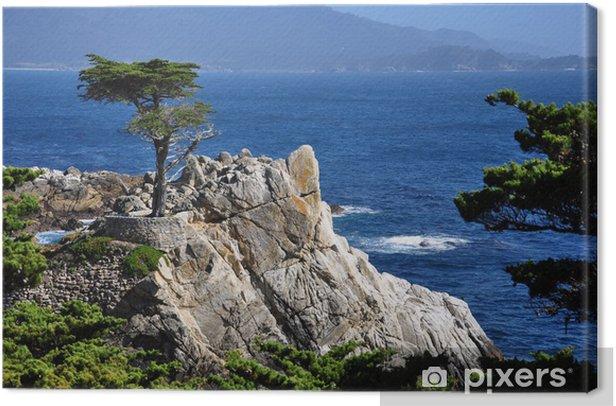 Obraz na płótnie Samotny cyprys w kamienistej plaży, 17 jazdy mili, Monterey - Ameryka