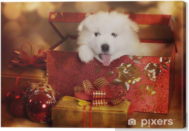 Obraz na płótnie Samoyed puppy w polu Boże Narodzenie - Ssaki