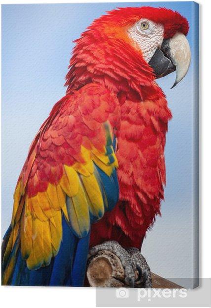 Obraz na płótnie Scarlet ara ptaków na okonie - Ptaki