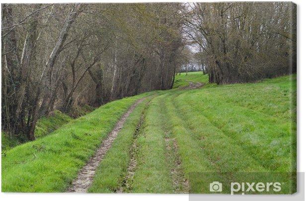 Obraz na płótnie Ścieżka między drzewami - Krajobraz wiejski