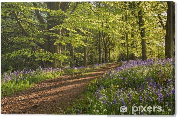 Obraz na płótnie Ścieżka przez bluebell drewna - Sporty na świeżym powietrzu