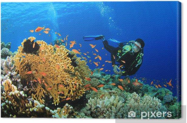 Obraz na płótnie Scuba Diver bada rafy koralowej w Morzu Czerwonym - Tematy