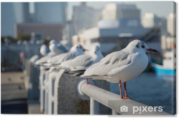 Obraz na płótnie Sea-Gull 3 - Ptaki