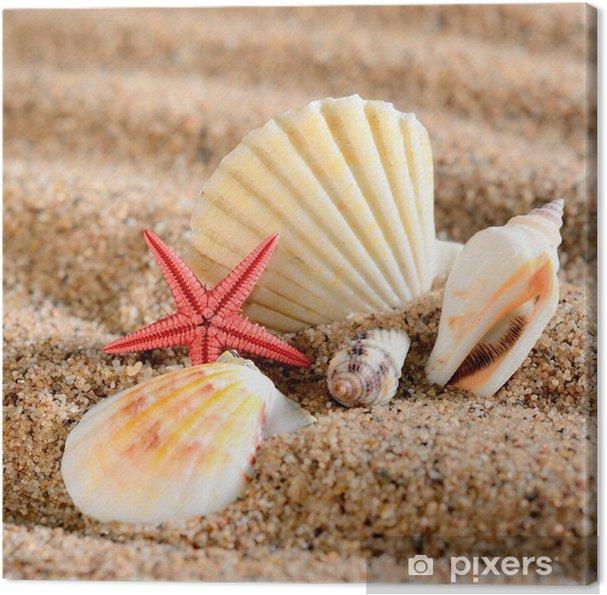 Obraz na płótnie Sea star i powłoki na piaszczystej plaży - Wakacje