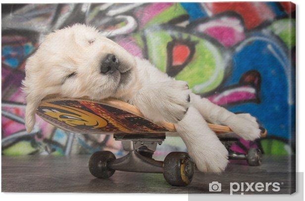 Obraz na płótnie Skateboard Puppy - Ssaki