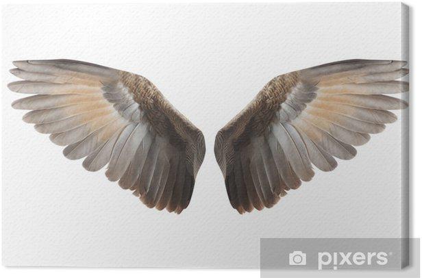 Obraz na płótnie Skrzydła. - Fikcyjne zwierzęta
