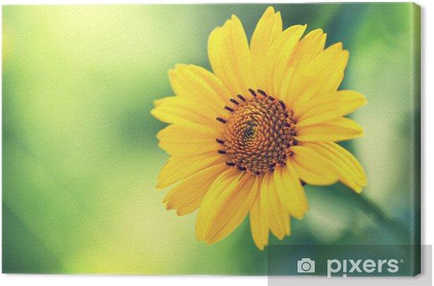 Obraz na płótnie Śliczny żółty kwiat lato - Kwiaty
