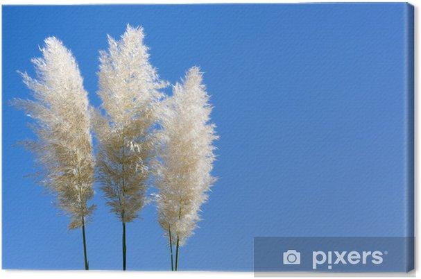 Obraz na płótnie Śliwki trawy pampasów - Rośliny
