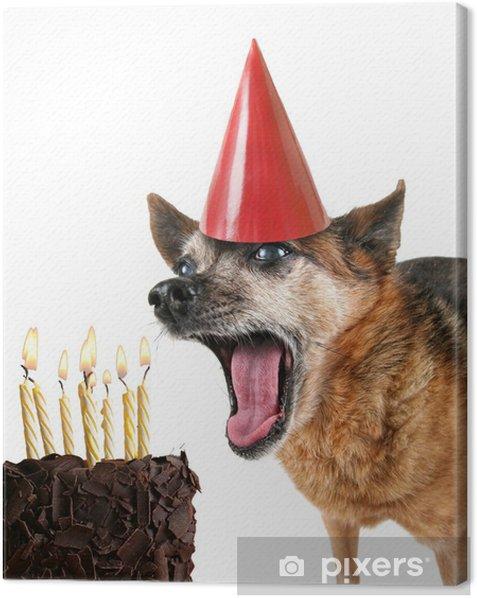 Obraz na płótnie Słodkie chihuahua z urodzinowego tortu i kapelusz partii na - Ssaki