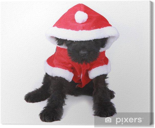 Obraz na płótnie Słodkie Czarny Rosyjski Terrier Mikołaj na białym tle - Ssaki