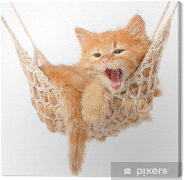 Obraz na płótnie Słodkie rudowłosa kotka w hamaku - Przeznaczenia