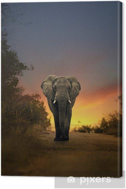 Obraz na płótnie Słoń afrykański spaceru w zachodzie słońca -