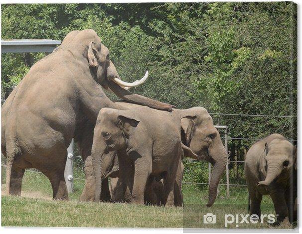Obraz na płótnie Słoń - Szczęście