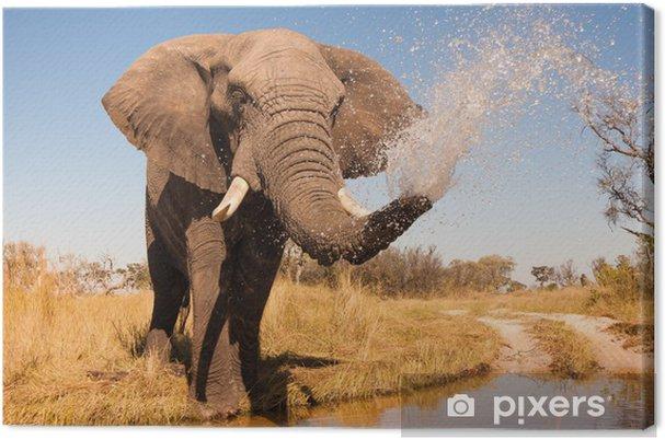 Obraz na płótnie Słoń - Tematy