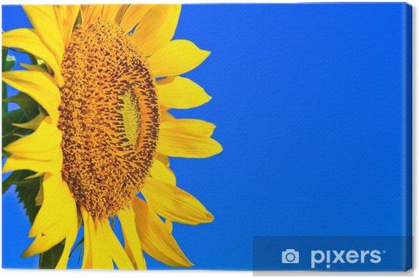 Obraz na płótnie Słonecznik w Tajlandii - Kwiaty