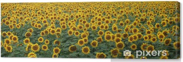 Obraz na płótnie Słonecznik, żółty, panoramiczny Z2 - Tematy