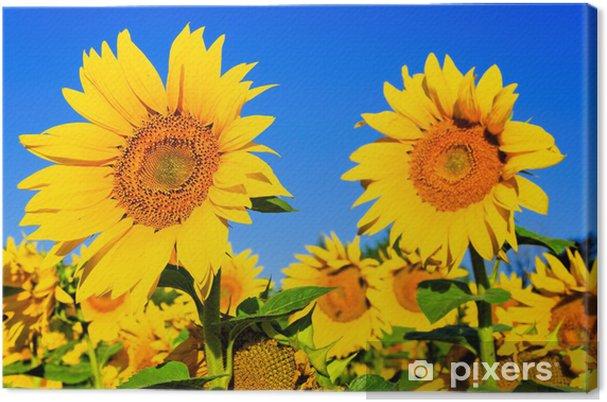 Obraz na płótnie Słonecznik - Nasiona
