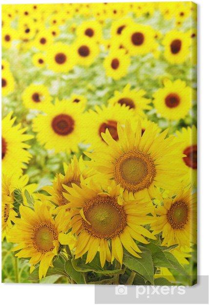 Obraz na płótnie Słoneczniki na polu - Tematy