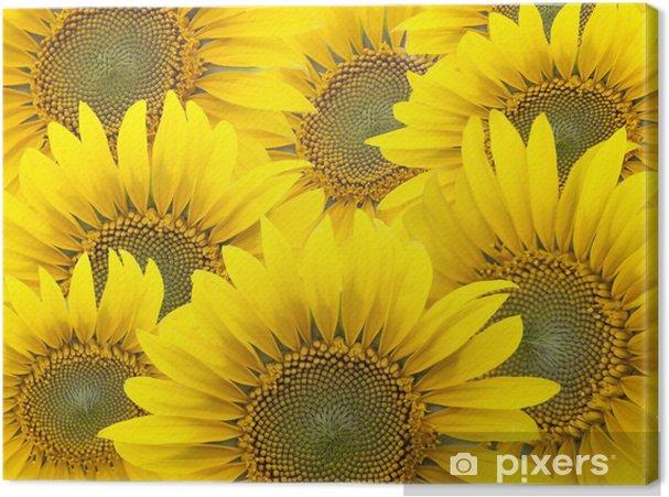Obraz na płótnie Słoneczniki - Tematy