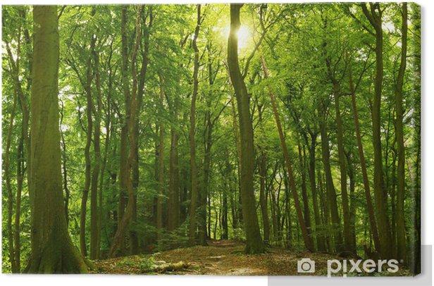 Obraz na płótnie Słoneczny letni las - Przeznaczenia