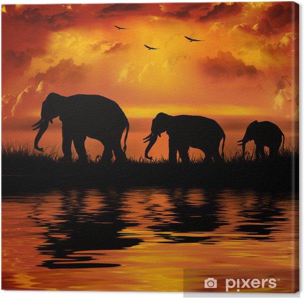 Obraz na płótnie Słonie na pięknym tle zachodu słońca - Tematy