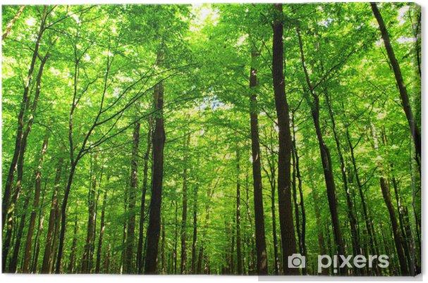 Obraz na płótnie Soczysta zieleń lasu - iStaging
