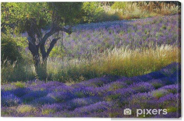 Obraz na płótnie Soleil de Provence - Tematy