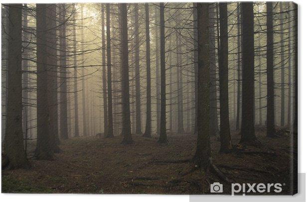 Obraz na płótnie Sosna krajobraz las o zachodzie słońca - Inne pejzaże