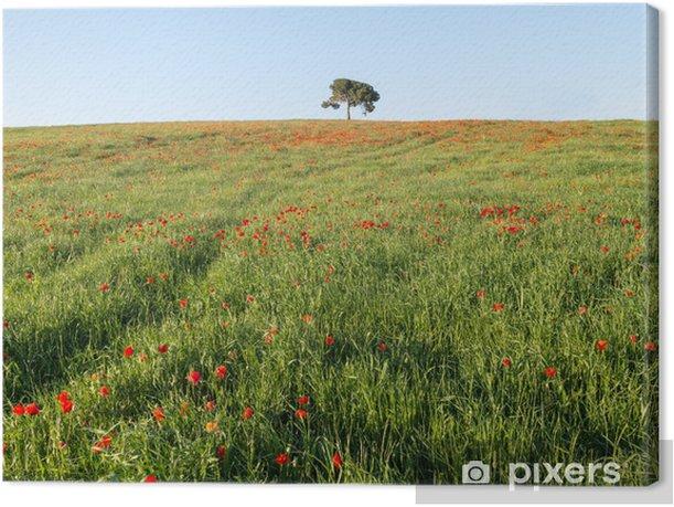 Obraz na płótnie Sosna na wzgórzu - Krajobraz wiejski