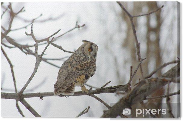 Obraz na płótnie Sowa uszata - Ptaki
