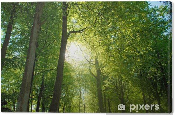 Obraz na płótnie Spacer las - Wolność