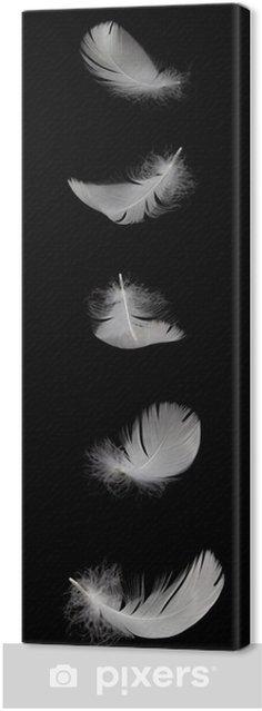 Obraz na płótnie Spada White Swan wtapianie samodzielnie na czarnym tle - Ptaki