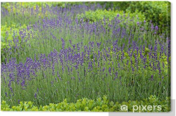 Obraz na płótnie Splendid, ozdobne ogrody w zamkach w Dolinie Loary - Budynki prywatne