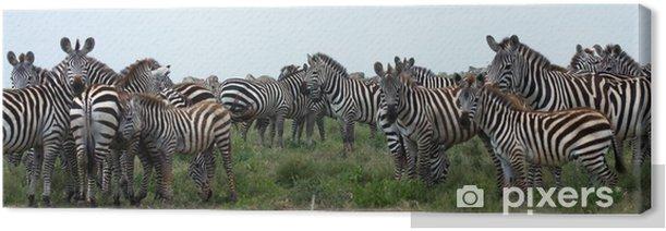 Obraz na płótnie Stada Zebry Serengeti Tanzania Afryki - Ssaki