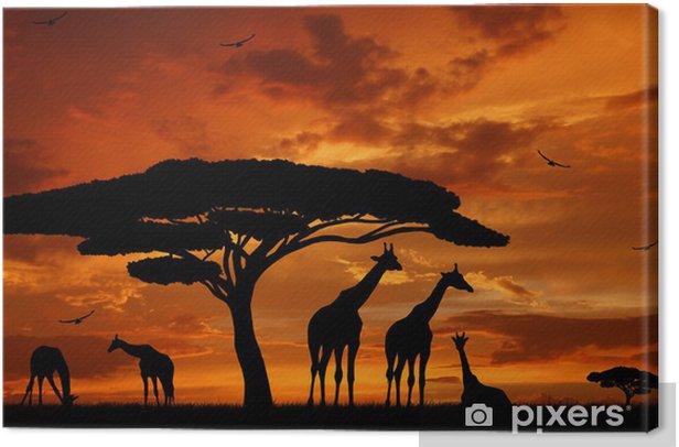 Obraz na płótnie Stado żyraf w zachodzącym słońcu -