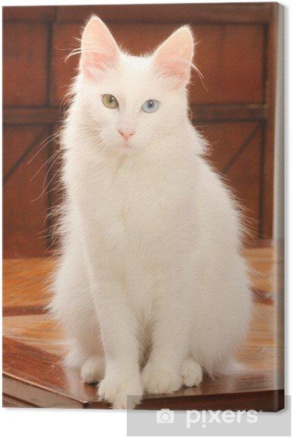 Obraz na płótnie Stanowią eleganckie turecką Kot Angora - Tematy