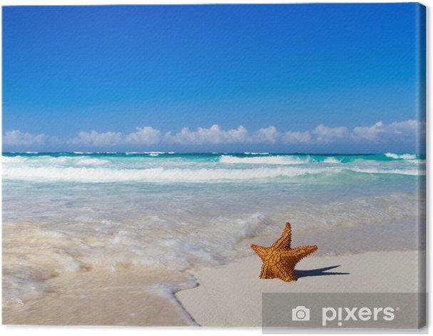 Obraz na płótnie Starfish z oceanu -