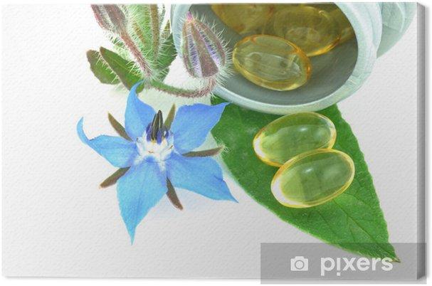 Obraz na płótnie Starflower lub olej z ogórecznika - Rolnictwo