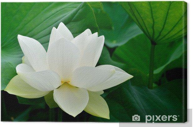 Obraz na płótnie Starożytna lotosu - Pory roku