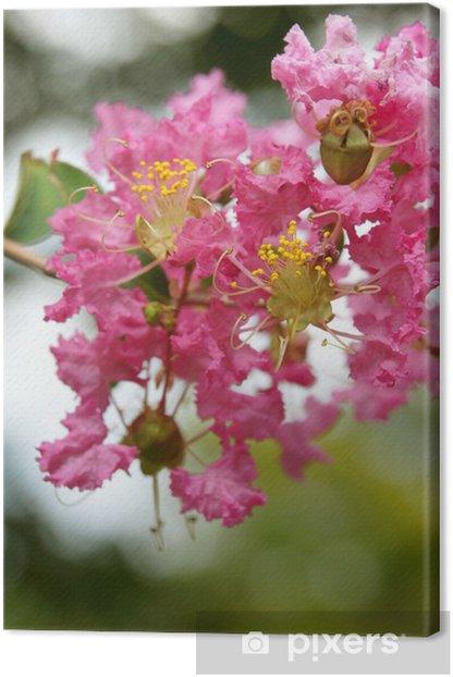 Obraz na płótnie Sto dni czerwony (sa su ru べ ri) - Kwiaty