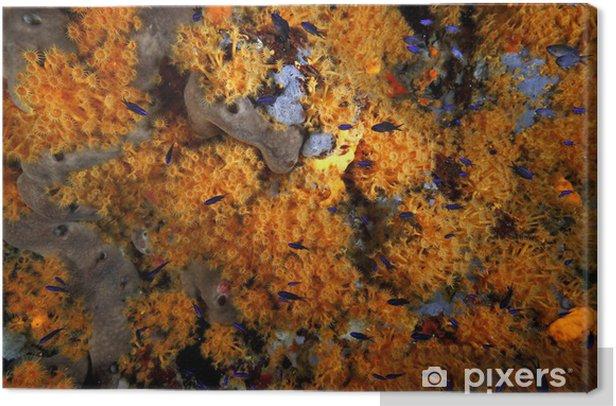 Obraz na płótnie Stokrotki kwitną parazoantos akwarium morskie - Pod wodą