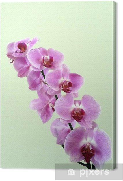Obraz na płótnie Storczyki - Kwiaty
