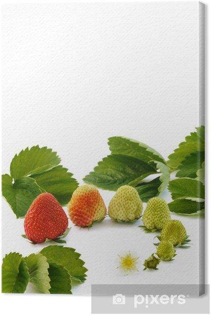 Obraz na płótnie Strawberry wzrostu samodzielnie na białym tle - Cuda natury