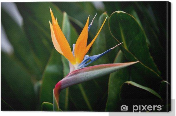 Obraz na płótnie Strelicja królewska - Kwiaty