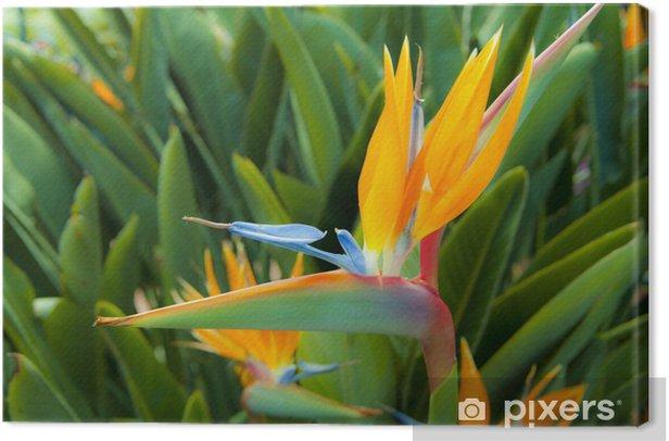 Obraz na płótnie Strelizie - Kwiaty