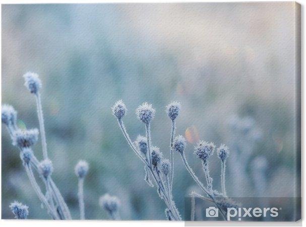 Obraz na płótnie Streszczenie naturalne z zamrożonych roślin lub pokryte szronem rym - Krajobrazy