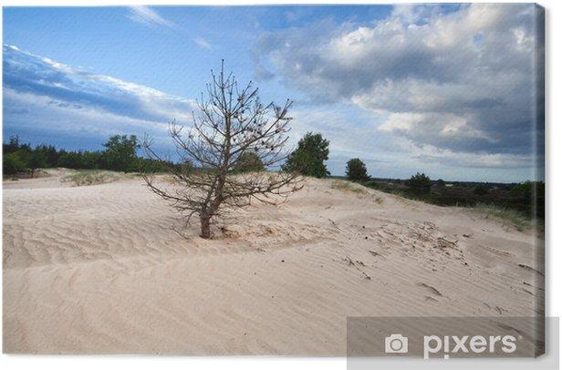 Obraz na płótnie Sucha sosna drzewa na piaszczystych wydmach - Niebo