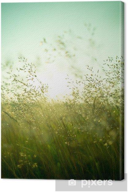 Obraz na płótnie Sucha trawa latem -